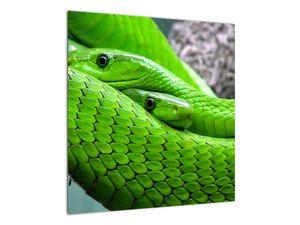Obraz zelených hadů (V020689V5050)