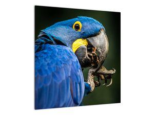 Obraz papouška (V020714V5050)