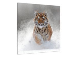 Obraz bežiaceho tigra v snehu (V020719V5050)