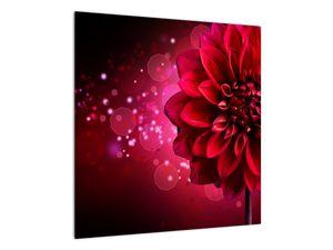 Obraz červené kvety (V020807V5050)