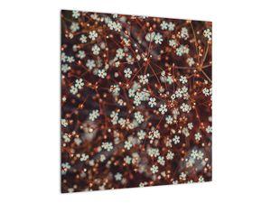 Obraz květiny Pomněnka lesní (V020811V5050)