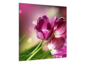 Obraz růžových tulipánů (V020887V5050)