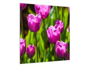 Obraz tulipánov na lúke (V020893V5050)
