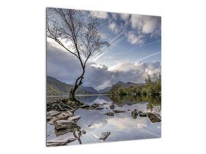 Obraz řeky se stromem (V020917V5050)