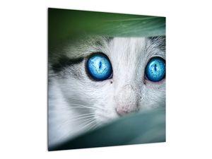 Obraz kočky (V020944V5050)