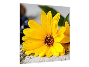 Obraz žluté květiny (V020952V5050)