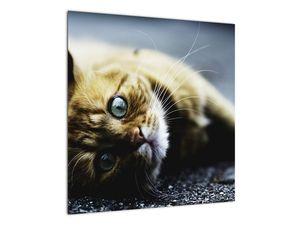 Obraz kočky (V020963V5050)