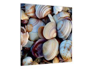 Kagyló képe (V021131V5050)
