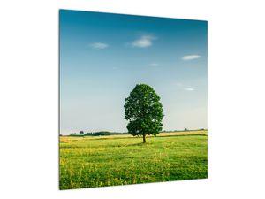 Obraz stromu na louce (V021171V5050)