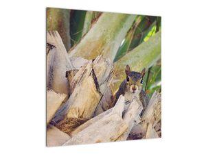 Obraz veverky na stromu (V021177V5050)
