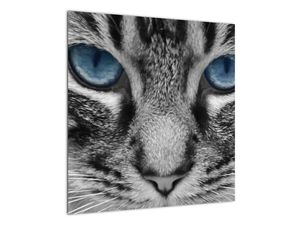 Obraz kočky (V021221V5050)