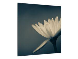 Obraz květiny (V021223V5050)