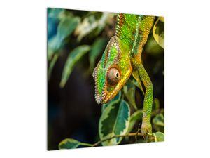 Obraz chameleona (V021236V5050)