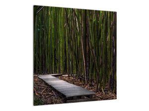 Obraz - Medzi bambusy (V021324V5050)