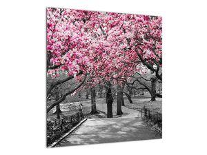 Obraz stromů Magnolíie (V021344V5050)