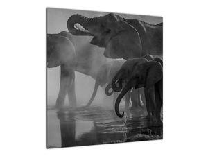 Obraz slonů - černobílý (V021575V5050)