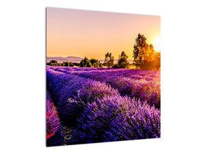 Obraz levandulového pole, Provence (V021590V5050)
