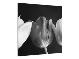 Kép - fekete-fehér tulipán virág (V021916V5050)