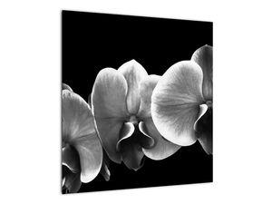 Obraz květu orchideje (V022015V5050)