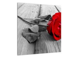 Slika crvene ruže (V022288V5050)