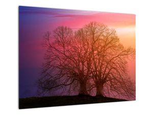 Obraz stromů v mlze (V020088V7050)