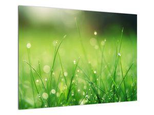 Obraz - rosa na trávě (V020169V7050)