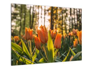 Obraz - kvety tulipánov (V020195V7050)