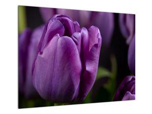 Tablou cu flori de lalele (V020215V7050)