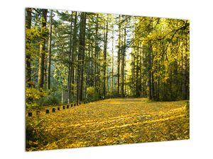 Tablou - pădurea toamna (V020218V7050)
