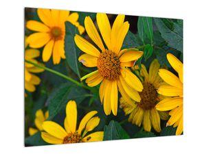 Slika žutih cvjetova (V020309V7050)