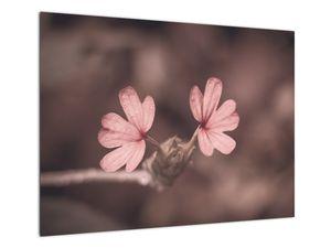 Slika ružičastog cvijeta (V020375V7050)