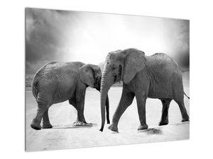Obraz - černobílí sloni (V020398V7050)