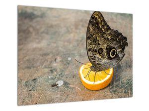 Obraz motýla (V020454V7050)
