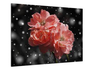 Obraz růžové květiny (V020471V7050)