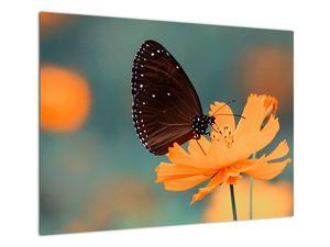 Obraz - motýl na oranžové květině (V020577V7050)