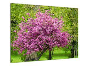 Obraz rozkvetlého stromu na louce (V020654V7050)