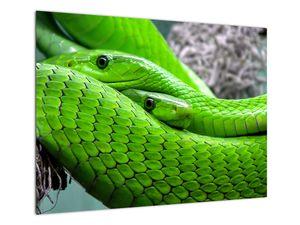 Obraz zelených hadů (V020689V7050)