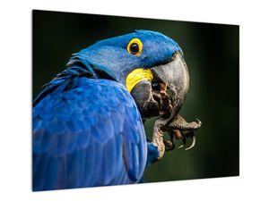 Obraz papouška (V020714V7050)