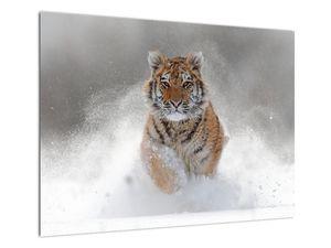 Obraz bežiaceho tigra v snehu (V020719V7050)