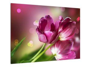 Obraz růžových tulipánů (V020887V7050)