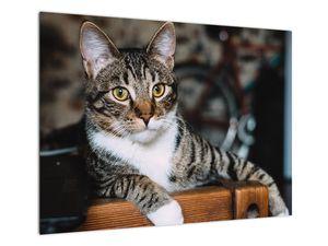 Obraz kočky (V020889V7050)