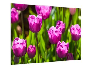 Obraz tulipánov na lúke (V020893V7050)