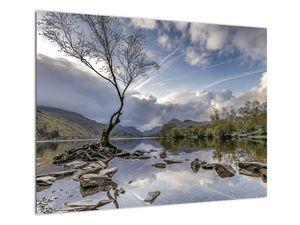 Obraz řeky se stromem (V020917V7050)