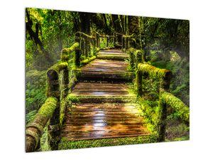 Obraz schodů v deštném pralese (V020941V7050)