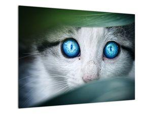 Obraz kočky (V020944V7050)