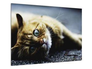 Obraz kočky (V020963V7050)