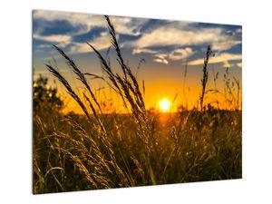 Slika polja pri zalasku sunca (V021001V7050)