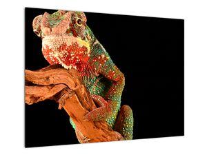 Obraz chameleona na větvi (V021125V7050)