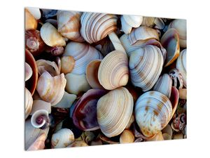 Kagyló képe (V021131V7050)