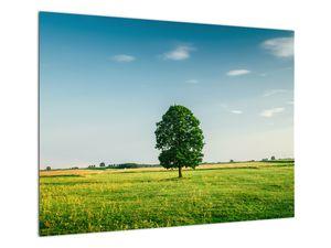 Obraz stromu na louce (V021171V7050)